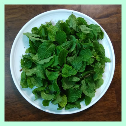 mint-leaves-for-mutton-briyani
